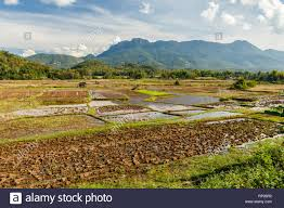 Asia Drought Barren Land High Resolution Stock Photography and Images -  Alamy