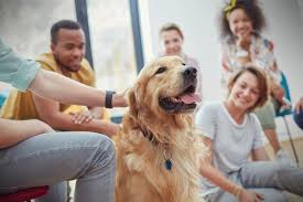Do Handlers Impact the Success of Therapy Dog Sessions?