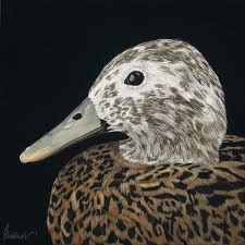 Laysan Duck, Laysan Teal | Artists for Conservation Festival