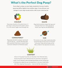 Bowel Movement Consistency Chart All About Dog Poop Dog Diarrhoea Colour And More Purina