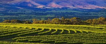 """mclaren vale wineries""的图片搜索结果"
