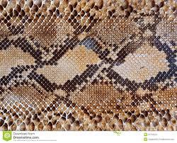 Snake Skin Pattern Best Snake Skin Pattern Stock Photos Royalty Free Pictures