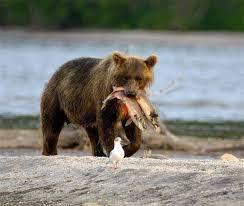 Контрольная работа по английскому языку класс УМК Биболетова М З  a ann likes milk a a cat can run a a bear has got two fish