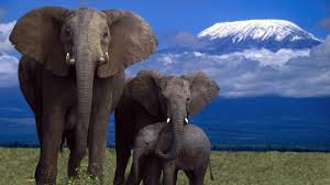 Image result for elephants photos download