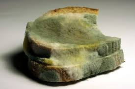 Bread Mold How To Identify Types Of Mold Science Trends