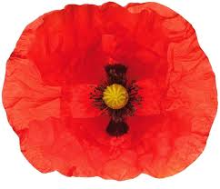 poppy wall decal piece poppies wall decal giant poppy wall decals poppy wall decal