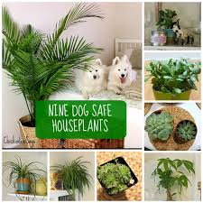 Chickadee Says: 9 Dog Safe Plants for a Stylish Home