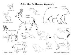 Coloring Pages Forest Animals Enchanted Coloring Pages Opatrunki Info