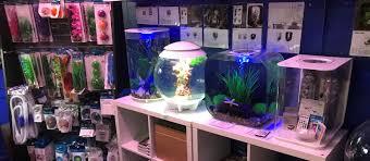 tropical fish aquatic plants