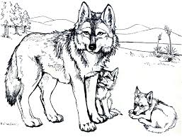 Small Picture Baby Wolf Games Coloring Coloring Pages
