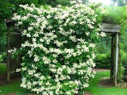 How To Choose And Maintain Climbing Plants  DIYClimbing Plants