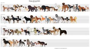 Obviously These Are Fictional Dogs But Could Use Design