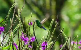biodiversity essays biodiversity essay by beccag anti essays