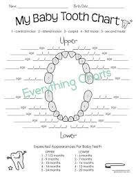 Baby Tooth Chart Pdf Printable
