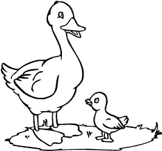 Small Picture Baby Duckling Coloring Pages Coloring Pages