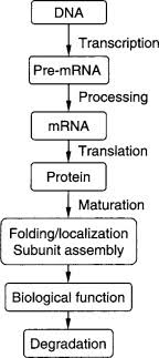 Protein Synthesis Flow Chart Key Protein Synthesis An Overview Sciencedirect Topics