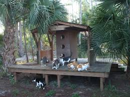Custom built Wood Cat Condo on wood platform. Withheld a catagory 3  hurricane (Wilma. Custom built Wood Cat Condo on wood platform.