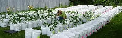 garden bucket. Garden Bucket