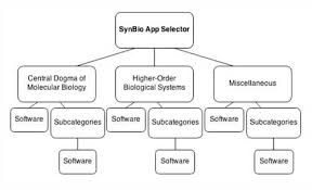term paper biology Sample Outline Research Paper
