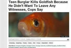 Teen burgler kills goldfish