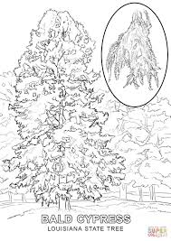 Small Picture Louisiana State Tree coloring page Free Printable Coloring Pages