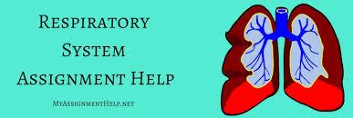 respiratory system assignment help biology assignment help respiratory system assignment help