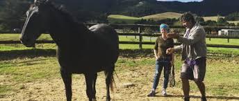 Echte Partnerschaft ohne Keks und Gerte: Training mit Ian und Anke Benson    Fü(h)rPferd Horsemanship