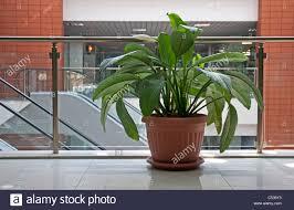 office flower pots. Office Plants. Flower Pot In Building Pots T