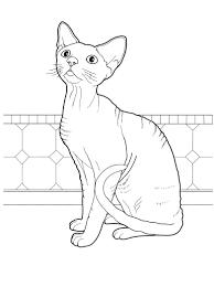 Endangered Sand Cat Kitten Wiring Diagram Database