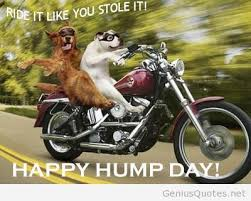 Funny Hump Day Quotes Gorgeous Quotes Part 48