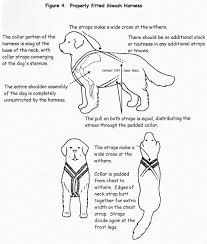 i found this explanation for a traditional siwash harness on a site devoted to newfoundland dogs