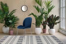 Samt Stuhl Stühle Esszimmerstuhl Velvet Wohnzimmerstuhl Blau