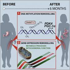 weight loss after gastric byp surgery in human obesity remodels promoter methylation cell reports