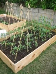 bamboo garden stakes. Bamboo Poles For Organic And Green Home Gardening! Garden Stakes G