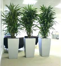 office plants low light awesome best large indoor plants low light for large indoor plants office
