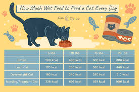 Overweight Cat Chart How Much Wet Food To Feed A Cat Every Day