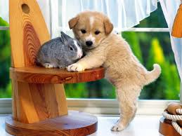 Puppy Wallpaper For Bedroom Cool Puppys Pictures 2015 Tops Hd Wallpapers