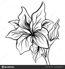 цветок лилии эскиз лили цветок руку рисование векторное