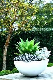 outdoor plant pots image of large flower for pot outdoor flower pots ideas