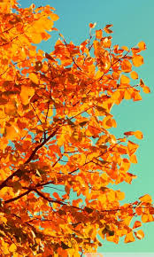 iphone 6 background tumblr fall. Contemporary Background Mobile WVGA 53 In Iphone 6 Background Tumblr Fall