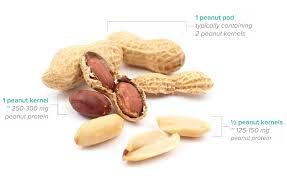 AR101 for Peanut Allergy - Aimmune
