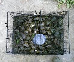 diy crab traps green blue