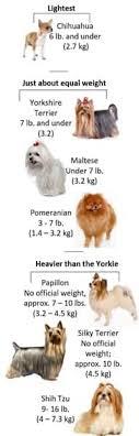 Yorkshire Terrier Weight
