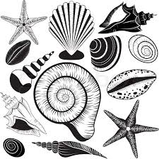 Seashell Design Shells Collection Seashells Vector Stock Vector Colourbox