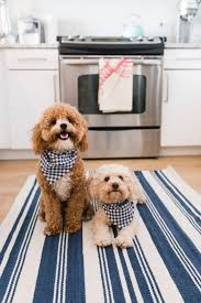 best cute pets images on animals puppy love and with area rugs for dogs them stain