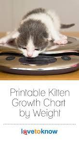 Kitten Growth Chart Weight Printable Kitten Growth Chart By Weight Kitten Growth
