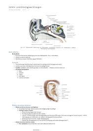Gehör Und Gleichgewichtsorgan Anatomie 890200 Studocu
