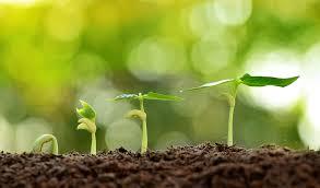 Resultado de imagem para sementes