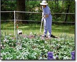 garden electric fence. Use Electric Fences For Garden Pest Control. On Our Pennsylvania Farm, We 22 Fence