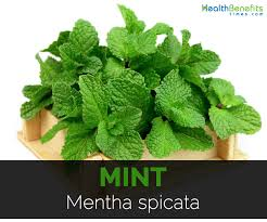 mint quick facts